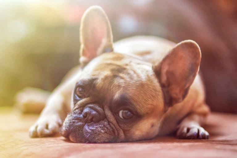 Assurance chien Crédit Mutuel